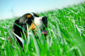 A cute dog in the grass — Stock Photo