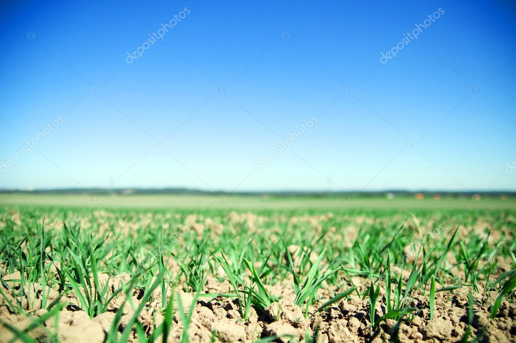 Plain field lanscape of agricultural fertile ground — Stock Photo #2046145