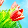 Royalty-Free Stock Photo: Spring flowers background