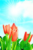 Fondo de flores de primavera — Foto de Stock