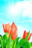 春天鲜花背景 — 图库照片