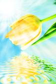 красивые весенние тюльпаны фон — Стоковое фото