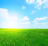 Sunny spring landscape — Stock Photo