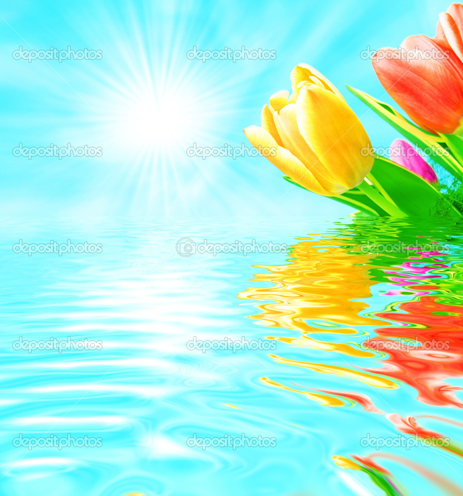 Spring fresh tulips flowers in crystal water reflection background — Stock Photo #2054368
