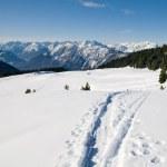 patika ile güzel kış manzarası — Stok fotoğraf