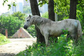 Old beneficent horse — Stock Photo