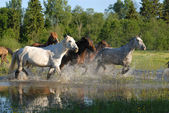 Flock of horses in splashes — Stock Photo