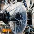 Stock Photo: Spokes Of Bicycle