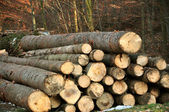 Wood pieces — Stock Photo