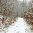 Winter path — Stock Photo #2169107