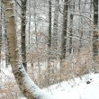 Winter forrest — Stock Photo #2169142