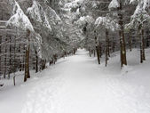 Winter path — Stock Photo