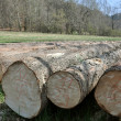 Timber — Stock Photo