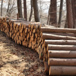 Wood piles — Stock Photo #2350121