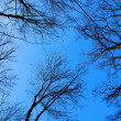 Trees on the blue sky - Stockfoto