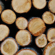 Pile of wooden logs — Stock Photo