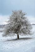 Winter landscape with three — Stock Photo