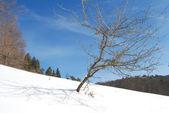 Nice dry three, winter landscape — Stock Photo
