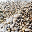 Wet pebbles background — Stock Photo #1729239