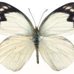 Butterflies — Stock Photo #1733003