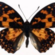 Butterflies — Stockfoto