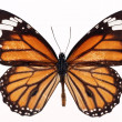Butterflies — Stock Photo #1733254