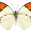 Butterflies — Stock Photo