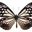 Butterflies — Stock Photo #1733309