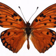 Butterflies — Stock Photo #1734164
