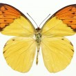Butterflies — Stock Photo #1734682