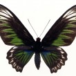 Butterflies — Stock Photo #1734708