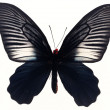 Butterflies — Stock Photo #1734813