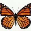 Butterflies — Stock Photo #1735348