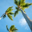 Palms and Caribbean sky — Stock Photo