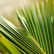 Palm leaf - Foto Stock