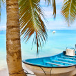 Coconut palm tree and a boat — Stock Photo