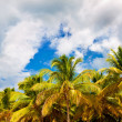 Storm clouds above the palm forest — Stock Photo