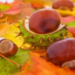 Many autumn leaves with some chestnuts - Stock Photo