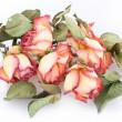 Bunch of dry roses - Stock Photo