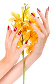 Hand with yellow orchid — Stockfoto
