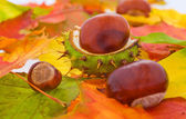Many autumn leaves with some chestnuts — Стоковое фото