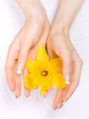 Daffodils in the hands — Stockfoto