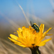 Insect on flower — Stock Photo