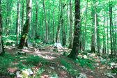 кемпинг в буковом лесу, биоградское озеро — Стоковое фото
