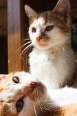 портрет маленькие желтые кошки — Стоковое фото