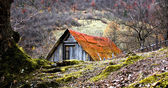 Small cottage in the forest — Stock Photo