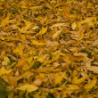 Stock Photo: Yellow autumn leaves lay on ground