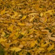 Yellow autumn leaves lay on the ground — Stock Photo