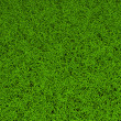 High resolution green grass background - Stock Photo