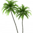 Two palm trees isolated on white — Stock Photo
